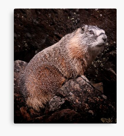 I'm The Nate Silver of Groundhogs Canvas Print