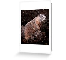 I'm The Nate Silver of Groundhogs Greeting Card