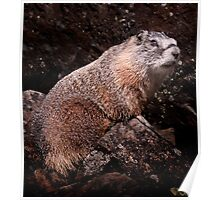 I'm The Nate Silver of Groundhogs Poster
