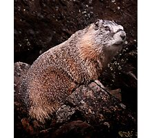 I'm The Nate Silver of Groundhogs Photographic Print