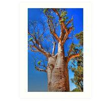 The Boab Tree Art Print