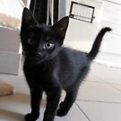 Black kitten by dreamorlive