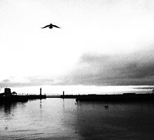 Seagulls Cant Be Square by sammythor