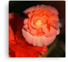 Strongly Pink - Tuberous Begonia Canvas Print