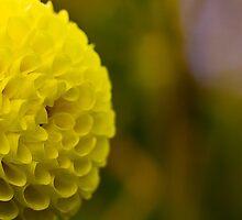 Flower - Dahlia Yellow by Anthony Radogna