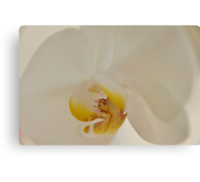 White Orchid, As Is Canvas Print