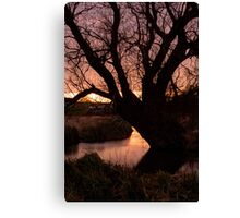 Old Man Willow Canvas Print