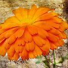 Orange Burst by Julesrules