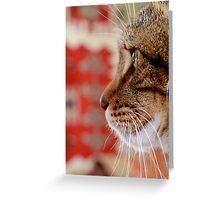 Feline Concentration Greeting Card