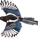 Magpie by Natalie Holden