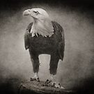 Philadelphia Eagle by Pat Abbott