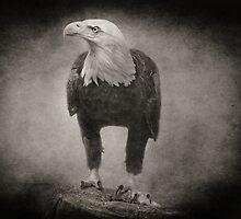 Philadelphia Eagle by Pat Abbott