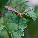 Insecte du sud by Marie Moriscot