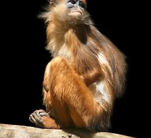 Banded Leaf Monkey  by SerenaB