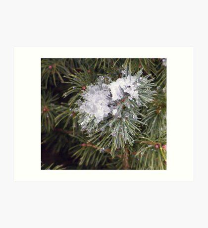 Pine,Snow and Ice Art Print