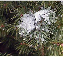 Pine,Snow and Ice Photographic Print