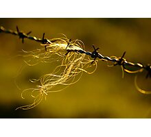 Caught on the Wire  Photographic Print