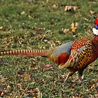 A Pheasant by Mark Johnson