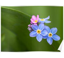 FORGET ME NOT FLOWERS Poster