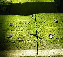 Moss on wood by Catinabucket