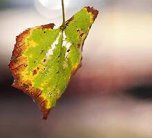 Autum by Peter Kappel