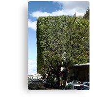 Topiary? Canvas Print