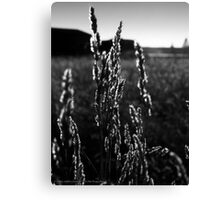 Leaves of Grass Canvas Print