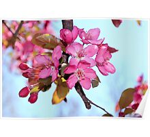 Tree Blooms Poster