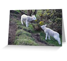 Lambs Puppy Food - Donegal Ireland  Greeting Card