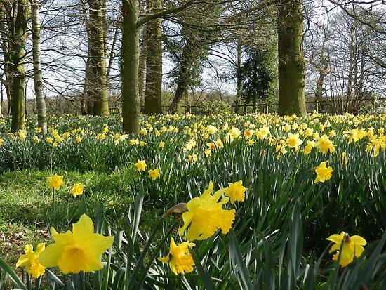 Spring Daffodils by CreativeEm