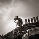 Goat On A Roof by Steve Silverman