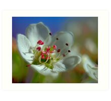 Desert Spring Blooms of Northern Nevada  Art Print