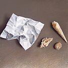 """Three shells for collection"" by Elena Kolotusha"