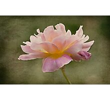 Just One Rose Photographic Print