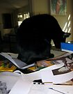 PhD Workspace 2 with Cat by mmargot