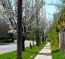 Walking down Spring lane by MarianBendeth