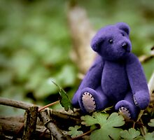 Blue Bear by Kerry McQuaid