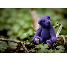 Blue Bear Photographic Print