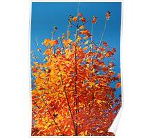 Burnt Orange Autumn Poster