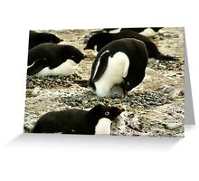 'Get Back in the Warm Chick': Adelie Penguin Greeting Card