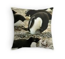 'Get Back in the Warm Chick': Adelie Penguin Throw Pillow
