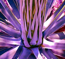 """Blue Agave"" by AlexandraZloto"
