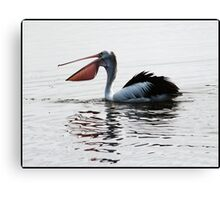 Pelican with Open Bill Canvas Print