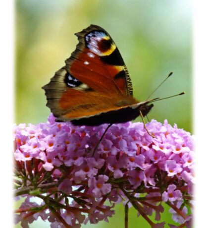 A Sip Of Nectar Sticker