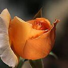 Orange Mood by Joy Watson