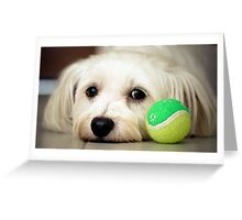 Please Play With Me! Greeting Card