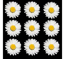 Nine Common Daisies Isolated on A Black Background Photographic Print