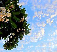 plumeria morning skies by Angelika Sielken