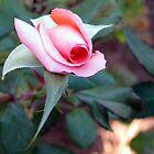A rosebud by Elizabeth Kendall