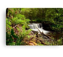 Forest Treasure. Canvas Print